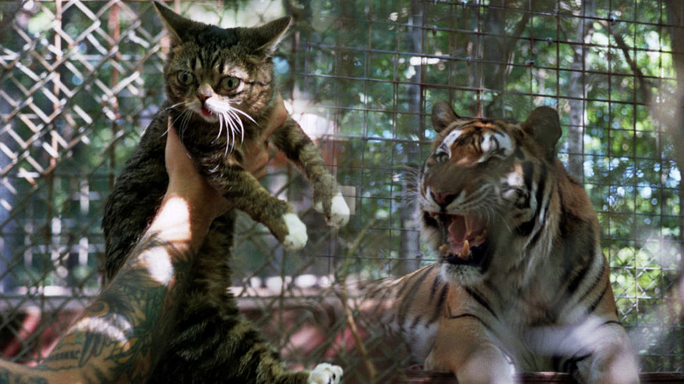 'Lil Bub & Friendz' directors Juliette Eisner and Andy Capper On the Internet Cat Phenomenon