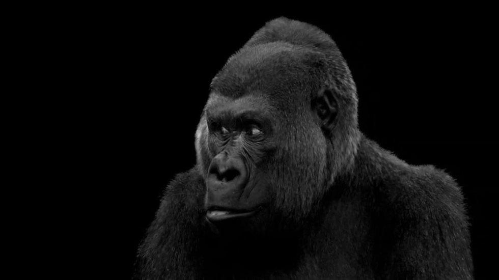 Interview: Godfrey Reggio Returns With the Breathtaking 4K Film 'Visitors'