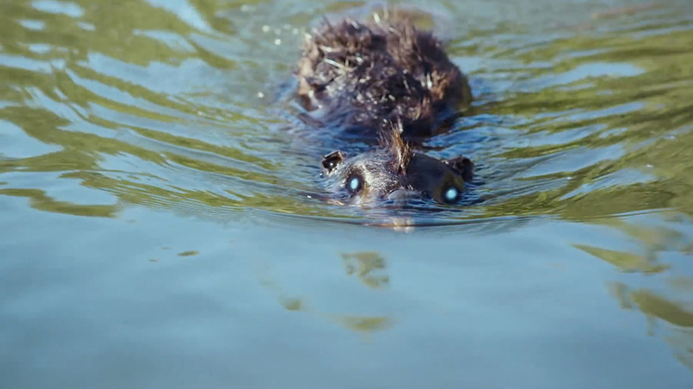 Jordan Rubin on 'Zombeavers,' Classic Effects and the Impact of Social Media