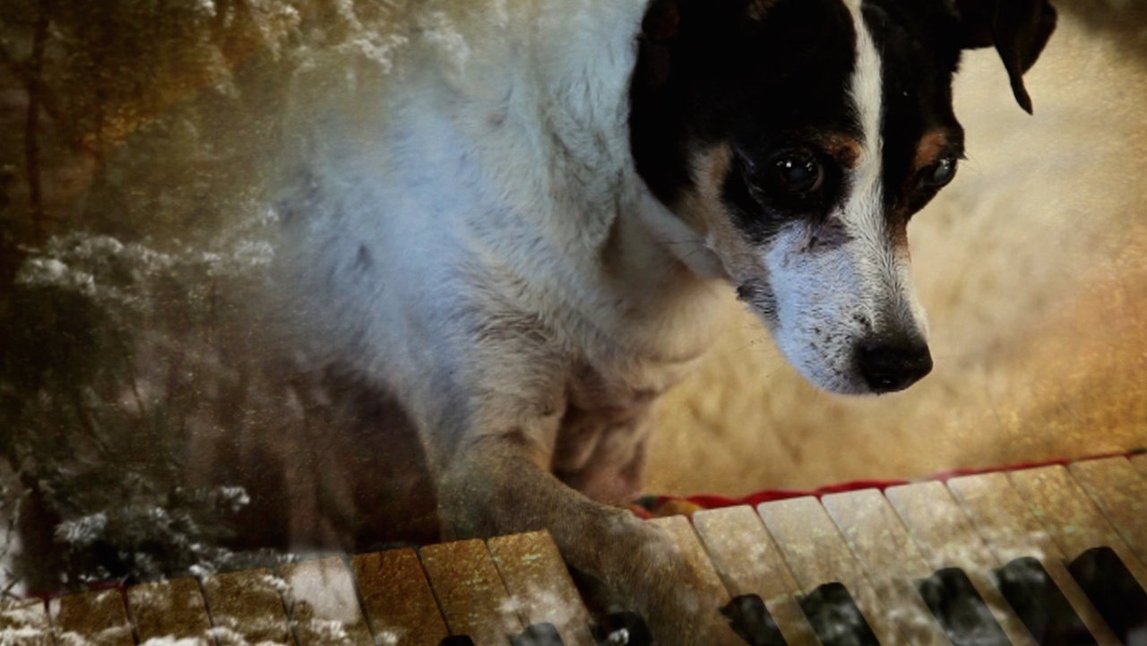 Come for the dog playing a piano, stay for one of the year's best documentaries... HEART OF A DOG (2015)